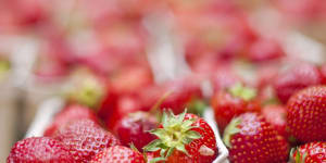 strawberries-in-containers-carrier